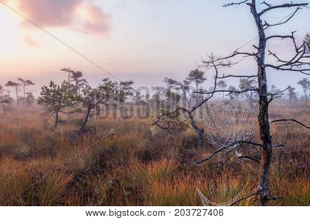 Marsh Latvia.Dunikas early in the morning at sunrise