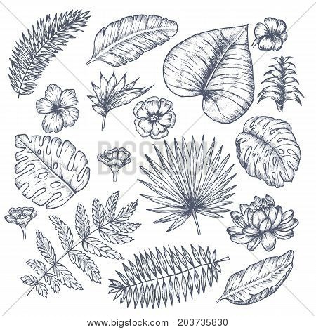 Tropical background with tropical leaves and flowers. Exotic Vector design.