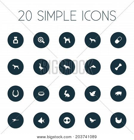 Elements Pig, Bunny, Waterbird And Other Synonyms Canine, Bird And Pooch.  Vector Illustration Set Of Simple Animals Icons.