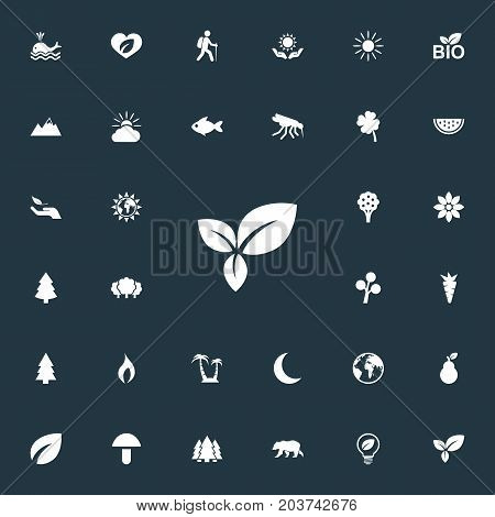 Elements Reef, Sunlight, Cloud And Other Synonyms Sun, Panda And Mountains.  Vector Illustration Set Of Simple Bio Icons.