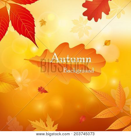 Vector illustration background Autumn falling leaves. Autumnal foliage fall and leafs flying in wind motion blur. Autumn design. Templates for placards banners flyers presentations reports.