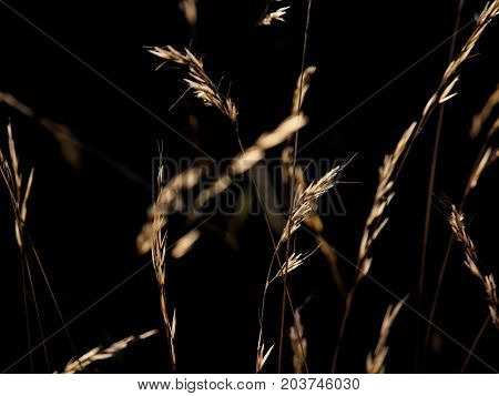 Backlit grass on a sunny summer evening
