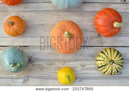 Pumpkins And Squashes On Wood