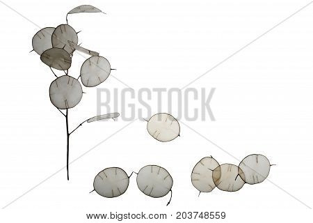 Unusual leaves with a tip in backlight. Texture of leaves isolated on white background. Eco style natural materials. Autumn a lonely tree fall leaves