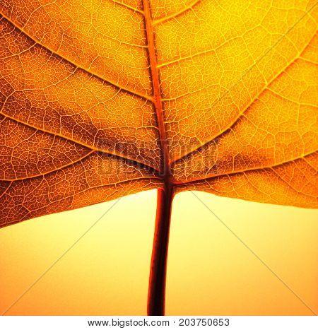A detail photo of an orange autumn leaf