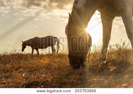Beautiful red horse grazing in a meadow in autumn