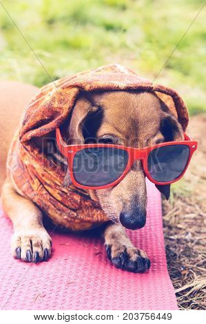 Portrait Of Funny Small A Dog Dressed As A Hipster
