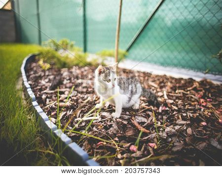 small cat of several colors inside the garden