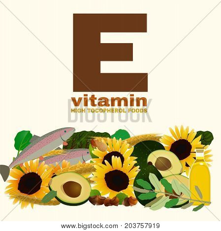 High vitamin E foods. Healthy fruits, seeds, nuts and vegetables. Vector illustration in bright colours isolated on a light background. Useful for medical and healthcare graphic design.