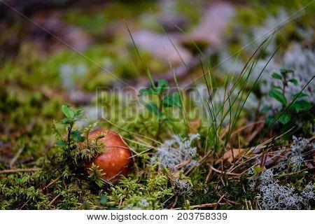 Mushrooms On Green Background
