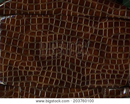 Beautiful natural background: lacquered brown crocodile leather