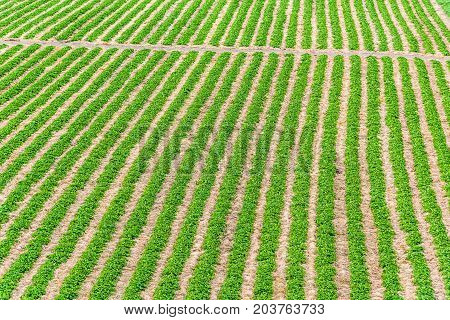Aerial View Of Farmland And Field In Ile D'orleans, Quebec, Canada With Green Furrows, Rows Or Aisle