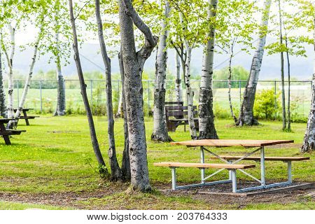 Rest Area With Picnic Tables During Summer With Green Birch Trees