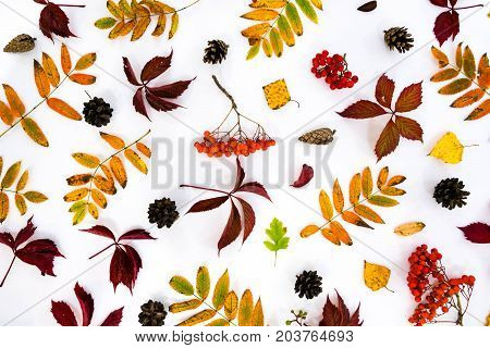 Pile of autumn leaves pine cones nuts over white background. collection beautiful colorful leaves border from autumn elements. top view copy space. Bright Pretty Fall Display of Colorful Ash Leaves in Natural Tones