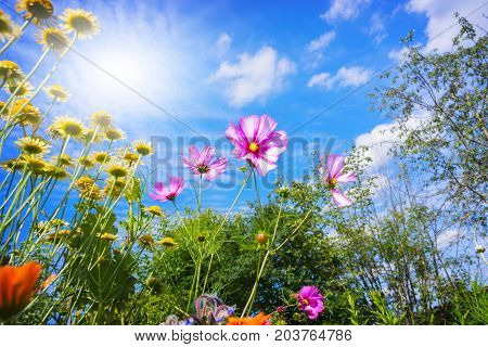 Colorful flowers and blue sky in summer