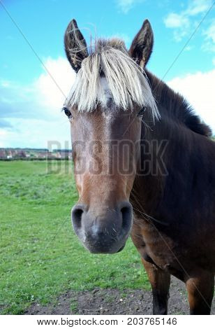 close up of a brown horse with a white main