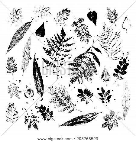 Leaf imprints. Set of leaves on white background. Vector illustration.