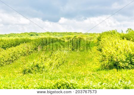 Green Farm Hill With Stormy Sky And Field Of Yellow Dandelion Flowers, Grass, Forest And Bushes In I
