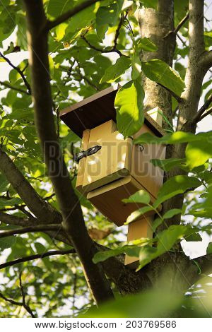 wooden nesting box on the tree with green leaves