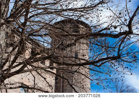 Tree In Front Of Madama Palace, Turin, Italy