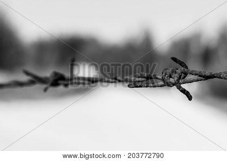 Rusty Barbed Wire, Valconca, Italyalc