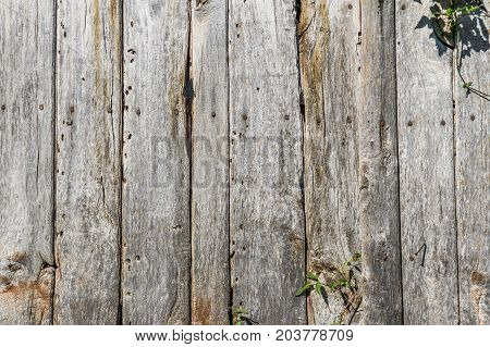 Old wood timeworn planks rustic. Texture background