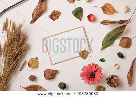 Set Of Autumn Dry Plants And White Postcard