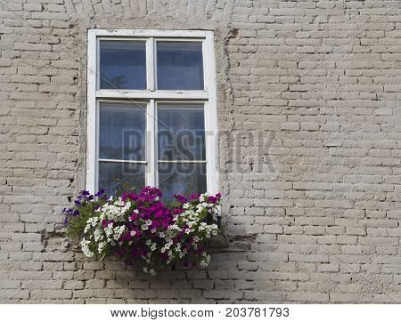 White Window With Flower Box With Colorful Geranium On Cream White Beige Brick Wall Background