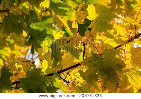 Beautiful Autumn Background With Green And Yellow Leaves