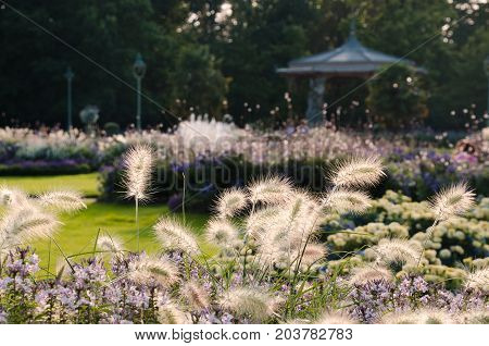RENNES FRANCE. August 27th 2017. The bandstand in the Parc du Thabor viewed through the late Summer flowerbeds planted with ornamental grasses. Evening light.
