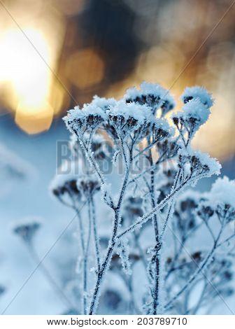Winter landscape.Winter scene .Frozenned flower Frozenned outdoor nature