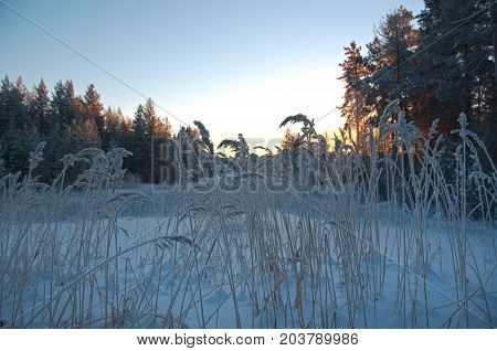 Winter scene .Frozenned flower Frozenned outdoor nature