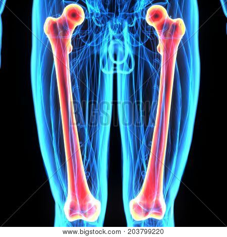3d illustration human body femurs of a human body parts