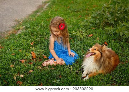 Cute little girl with a dog Sheltie breed. Best friends forever. Dog devotion. A girl and a pet in the park. Portrait of a mistress and a pet