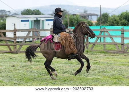 June 3 2017 Machachi Ecuador: cowboy wearing furry chaps riding a horse in the Andes