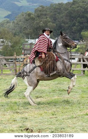June 3 2017 Machachi Ecuador: cowboy wearing furry chaps and traditional striped poncho on horseback