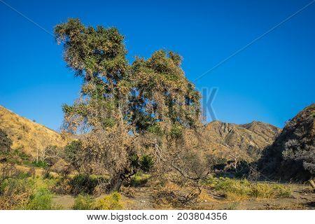 Tree In Desert Wash