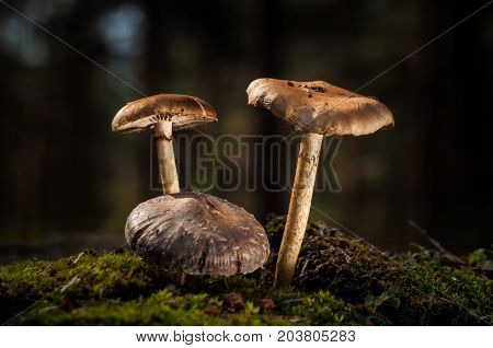 Mushrooms in the forest are illuminated by the sun's rays of light.