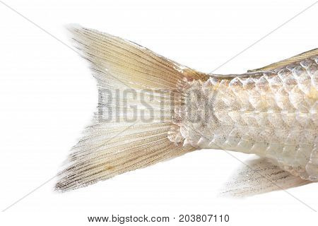 fish tail on a white background. macro