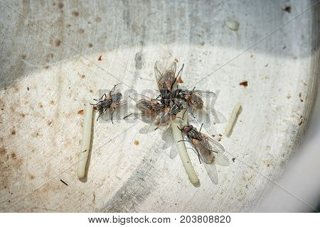 Flies are at the bottom of unwashed dishes eat the remains of food