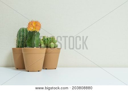 Closeup group of beautiful cactus in brown plastic pot for decorate on blurred white wooden desk and cream color wallpaper wall textured background in room with copy space