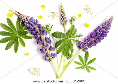 Violet flowers and leaves on a white background. Flat composition from a violet lupine and green leaves.