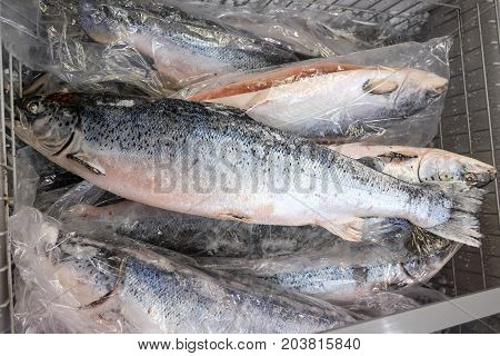 Salmon in freezer. Industry of raw food.