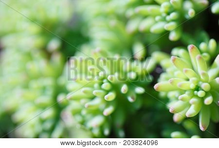 The close-up of succulent. Macro photography of nature.
