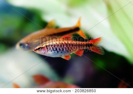 Aquaria still life scene, colorful freshwater fishes macro view, shallow depth of field photo