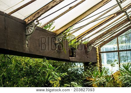 green house roof beam with plants and rusted supports