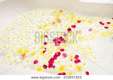 Spa bath full of frangipani flowers for relaxation