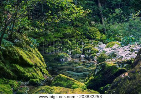 Crystal clear creek in the mystical evening forest in Slovenia Europe