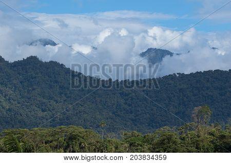 cloud forest in the Tena area of Ecuador