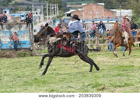 June 3 2017 Machachi Ecuador: cowboy in traditional poncho and chaps on horseback holding leather lasso in hand